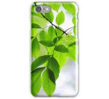 Green Leaves of Ash Tree iPhone Case/Skin