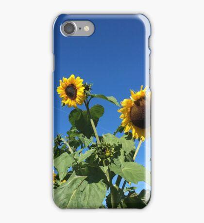 Stockholm Sunflowers  iPhone Case/Skin