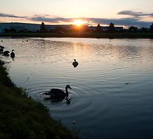 Geese at Sunrise by Robin Hecker
