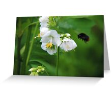 One busy bee... Greeting Card