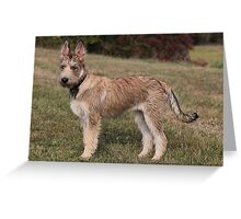 Berger Picard puppy Greeting Card