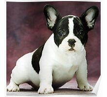 FB brindle pied puppy Poster