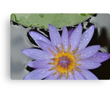 Hawaii Water Lily Canvas Print