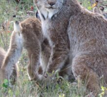 """Momma Lynx With 4 Babies...Only 3 Showing, """"Come On Children,Sit Still"""" Sticker"""