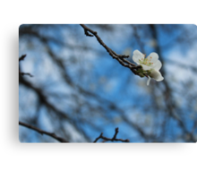 Blossoms At Best Canvas Print