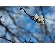Blossoms At Best Photographic Print