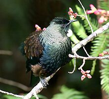 TUI and the first buds of Spring........! by Roy  Massicks