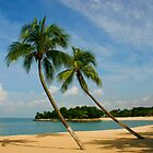 Palm Beach by John Wallace