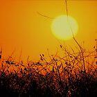 Sunrise by Stephen Burke