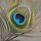 Peacock Feather by Glenn Esau