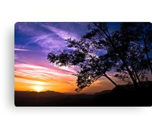 The Sunset Tree - Limited Edition (100 Copies) Canvas Print