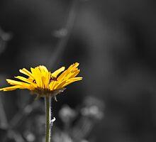 Yellow Sunflower by Dmitry Shuster