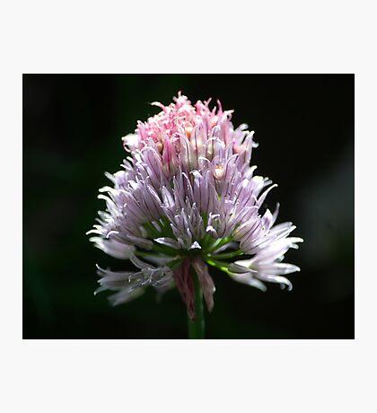 The Blossom Photographic Print