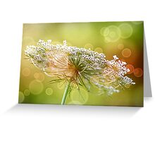 Bokeh Queen Anne's Lace Greeting Card