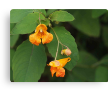 Orange Spotted Jewelweed Canvas Print