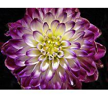 Petal Perfection Photographic Print