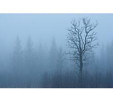 Emerging Tree Photographic Print