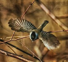 Dive Bomber by Lois  Bryan