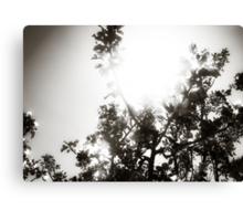 Apple Tree Sunburst Canvas Print