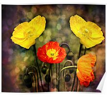 Yellow and Red Poppies Poster