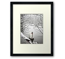 Winter Swan Framed Print