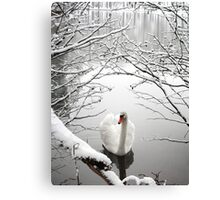 Winter Swan Canvas Print