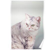 Cat Portraits Poster