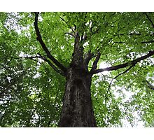 The Welcome Tree Photographic Print