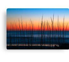 Dune Grass Dawn Canvas Print