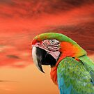 Macaw in Full Color by Rosalie Scanlon