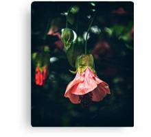Pink Blossoms #2 Canvas Print
