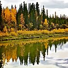Yukon Autumn by Linda Bianic