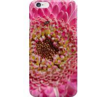 ALL IN PINK, UP CLOSE - GERBERA iPhone Case/Skin