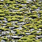 Moss on the rocks by Arie Koene