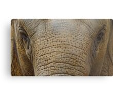 Baby Elephant Face Metal Print