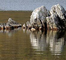 Rocks, Dove Lake, Cradle Mountain, Tasmania, Australia. by kaysharp
