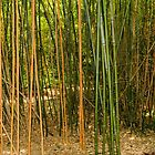 Bamboo by Elaine Teague