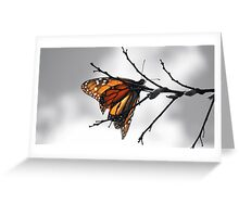 MONARCH BUTTERFLY IN A GRAY WORLD Greeting Card