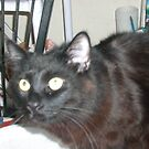 My Cat Jake by RobynLee