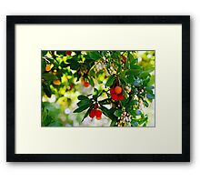 Bright and Beautiful Berries Framed Print