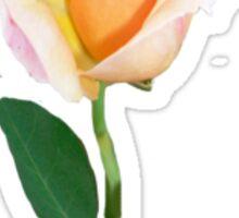 Apricot Rose  Sticker