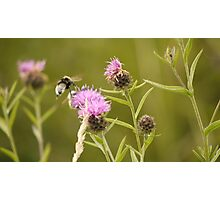 Busy Bee Photographic Print