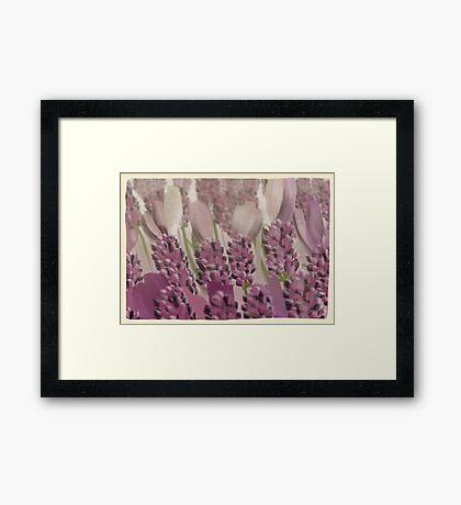 Vintage Lavender Framed Print