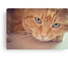 Red cat. Canvas Print