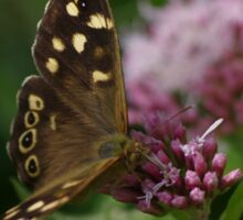 Speckled Wood Butterfly. Sticker