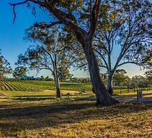 Bullock Creek Winery at Belvoir Park - Bendigo by Steven Jodoin