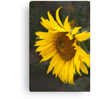 Keep your face to the sunshine...  Canvas Print