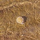 Shell universe by novikovaicon