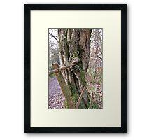 Tree Eats Fence! Framed Print
