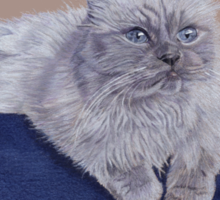 Bayou - A Portrait of a Himalayan Cat  Sticker